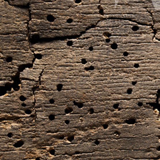 Plaga de Carcomas, termitas y otros insectos xilófagos.